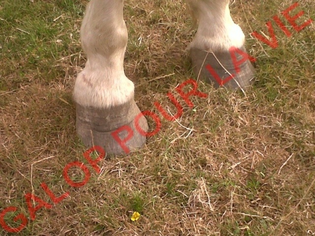 CALINOU - ONC poney  né en 1999 - adopté en août 2011 par Doucette Calino12
