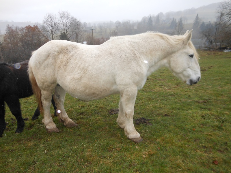 JADE - PP Percheron née en 1997 - adoptée en janvier 2013 par Helline 28 (ex Undicci) Dscn0416
