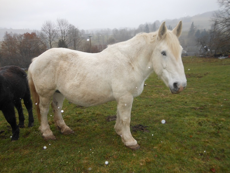 JADE - PP Percheron née en 1997 - adoptée en janvier 2013 par Helline 28 (ex Undicci) Dscn0417