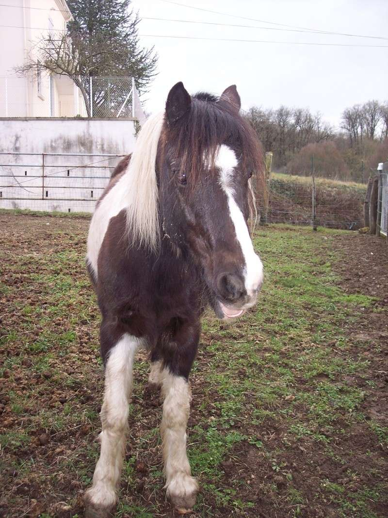 LOONY -  ONC poney né en 2001 - Adopté en juin 2011 par Carole Loony_14