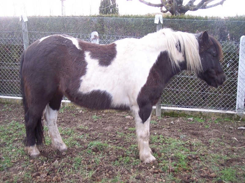 LOONY -  ONC poney né en 2001 - Adopté en juin 2011 par Carole Loony_16