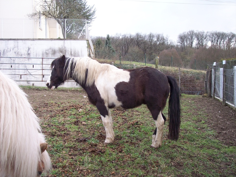 LOONY -  ONC poney né en 2001 - Adopté en juin 2011 par Carole Loony_17