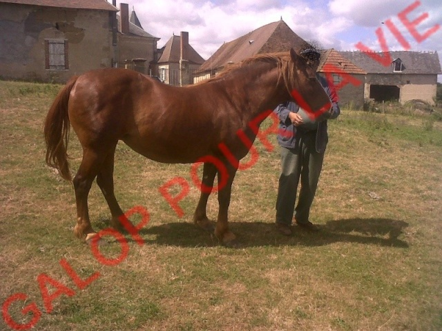 ROXANE - OI Poney née en 2000 - adoptée en décembre 2011 par Martine  Roxane10