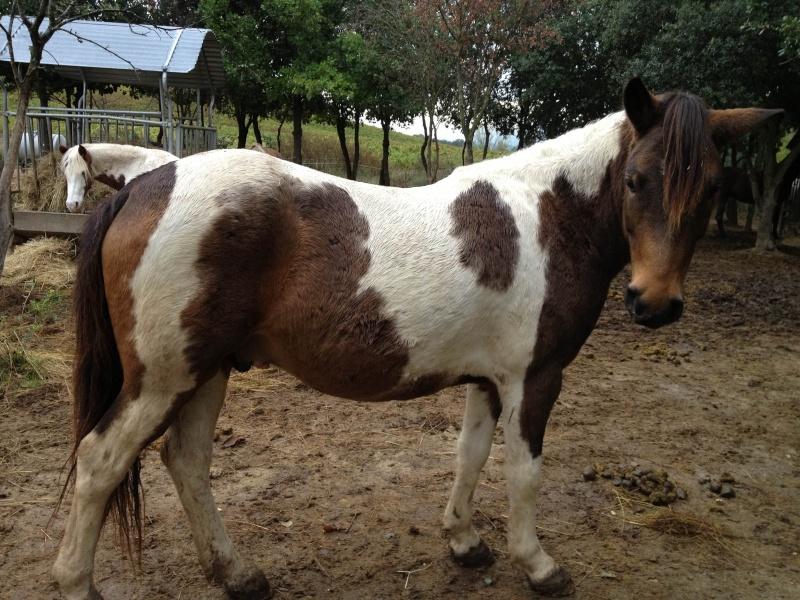 TIPI - ONC poney né en 2008 - adopté en avril 2010 par titan11 Tippi410
