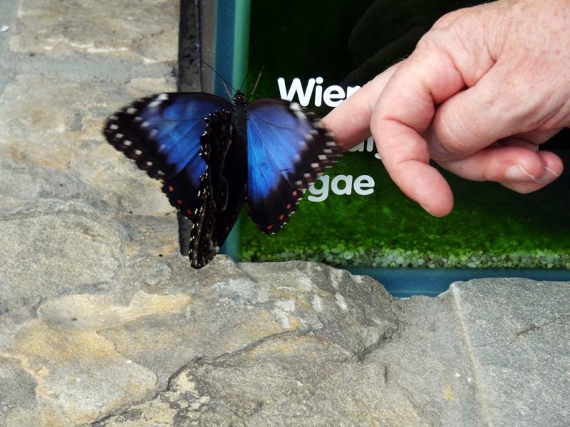 J'ai envie de vous parler du... Jardin Botanique... - Page 5 Dsc00715