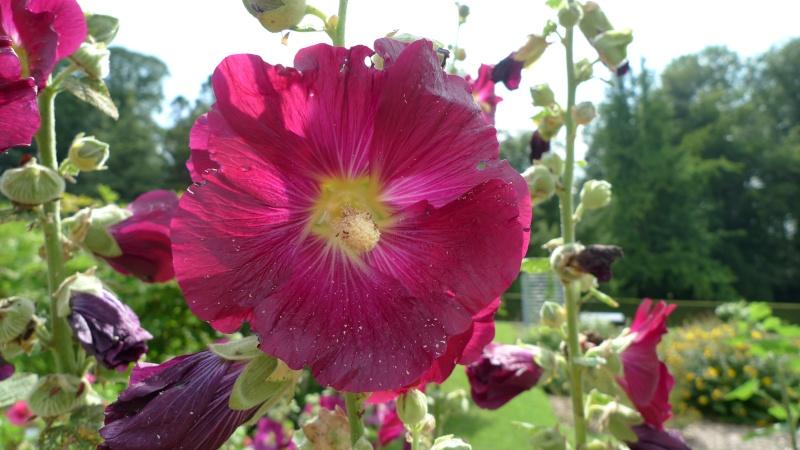 J'ai envie de vous parler du... Jardin Botanique... - Page 2 P1080710