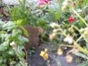 l'habitant nocturne de mon jardinet!!! Dscn6910