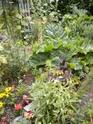 "mon jardinet""fouilli"" Dscn7010"