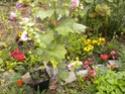 "mon jardinet""fouilli"" Dscn7011"