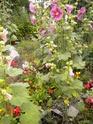 "mon jardinet""fouilli"" Dscn7012"