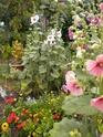"mon jardinet""fouilli"" Dscn7013"