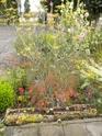 "mon jardinet""fouilli"" Dscn7014"