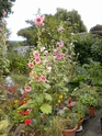 """mon jardinet""""fouilli"""" - Page 2 Dscn7015"""