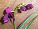 les orchidées défleuries.......... Dscn8313