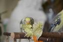 Petite perruche pas très intéressée ... Lsc_0014