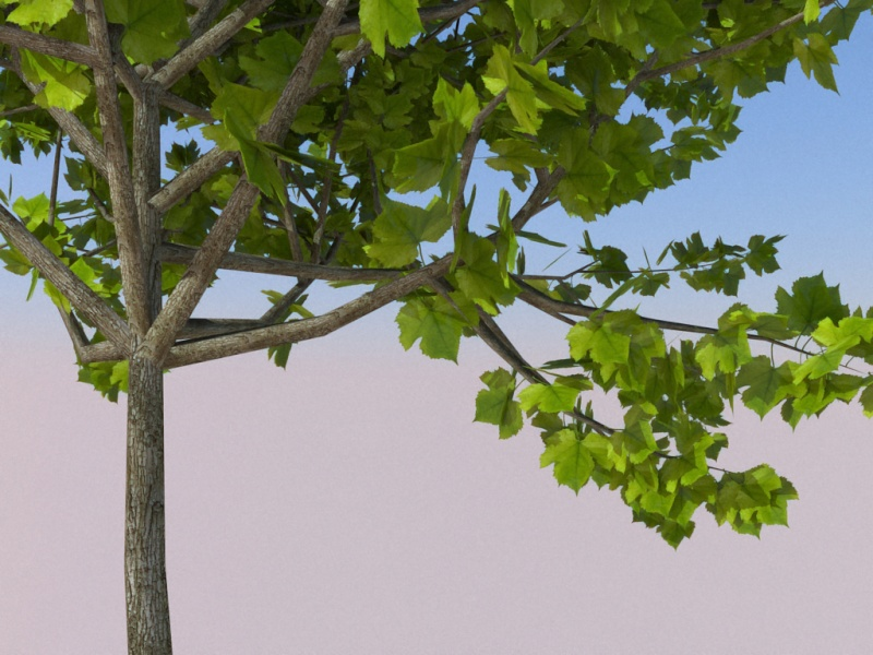 Faire des arbres Aaazrr10