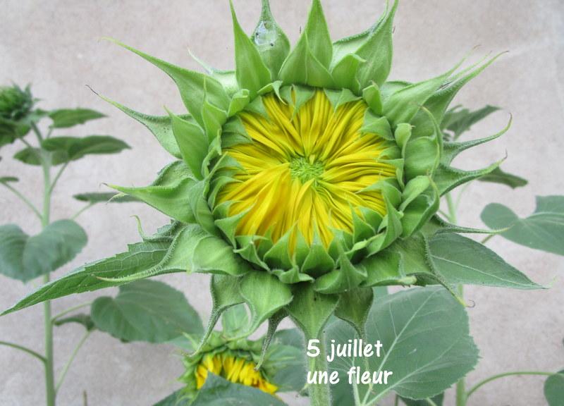 5 juillet : une ou des fleurs Img_3014