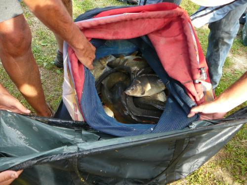 Festival de pêche sur le plan d'eau de Chuzelles (38) les 16 et 17 juin 2012 89c36f11