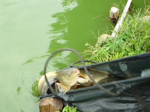 Festival de pêche sur le plan d'eau de Chuzelles (38 les 10 et 11 septembre 2011 - Page 2 9dc3ce10