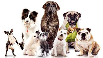Dogs Harmony Éducateur Canin Comportementaliste 36213410