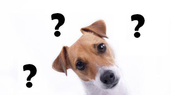 Dogs Harmony Éducateur Canin Comportementaliste Chien-10