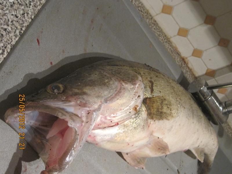 La pêche du Sandre ... Img_0917
