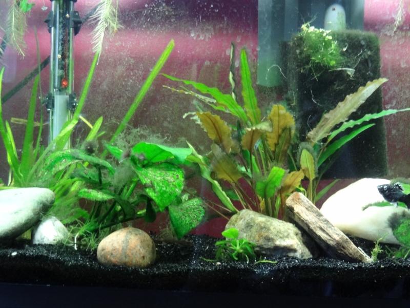 Mon aquarium Dsc00412