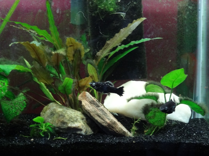 Mon aquarium Dsc00413