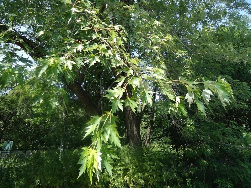 Самара: Ботанический Сад Dsc04816