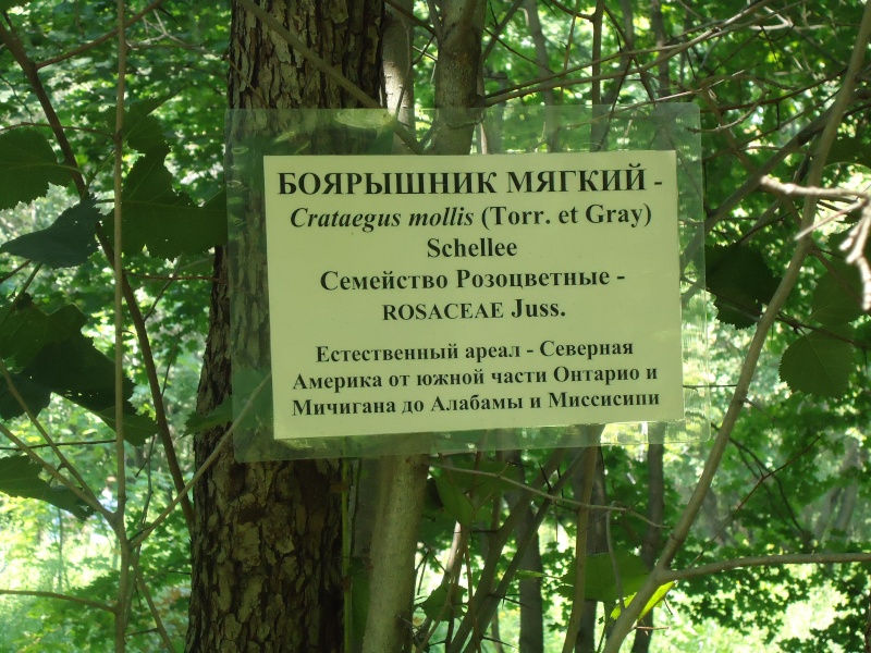 Самара: Ботанический Сад Dsc04818
