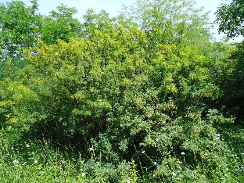 Самара: Ботанический Сад Dsc04819