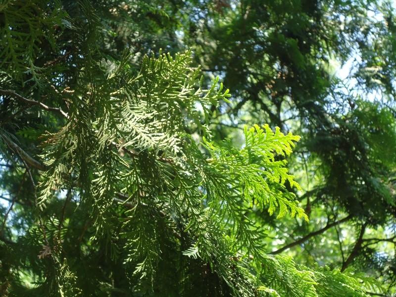 Самара: Ботанический Сад Dsc04821