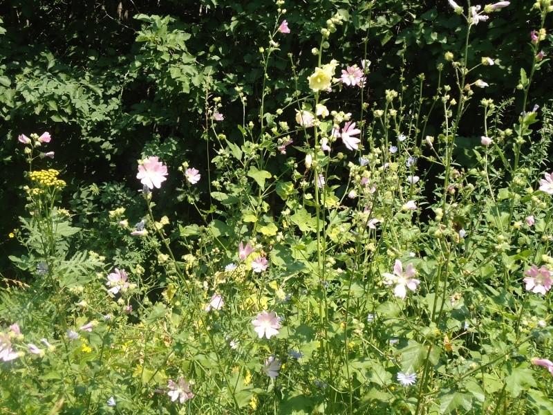 Самара: Ботанический Сад Dsc04825