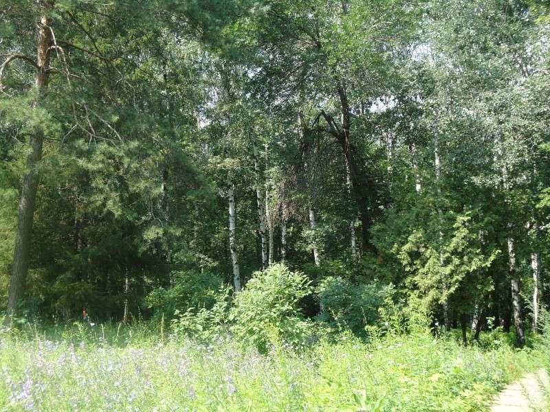 Самара: Ботанический Сад Dsc04827