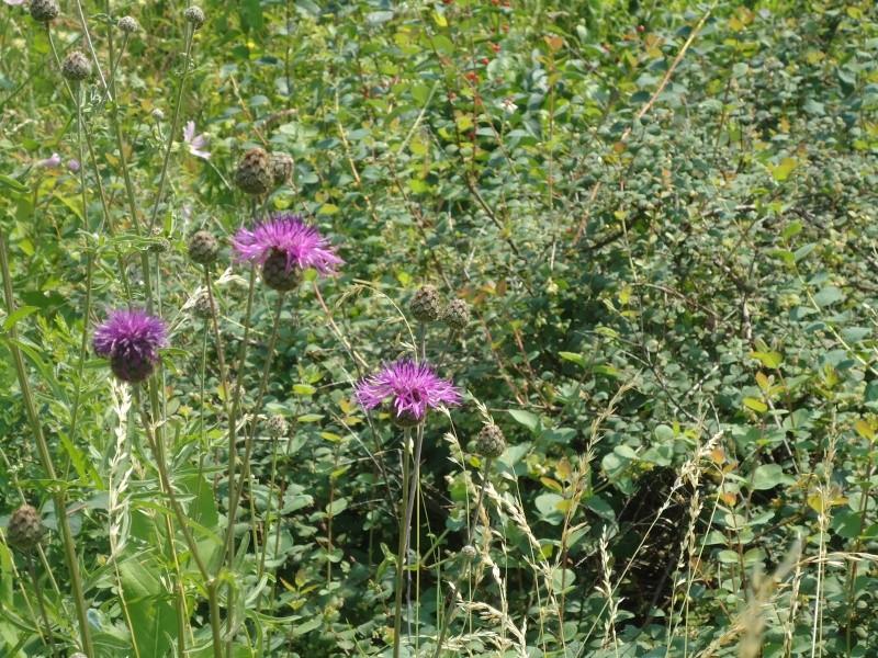 Самара: Ботанический Сад Dsc04833