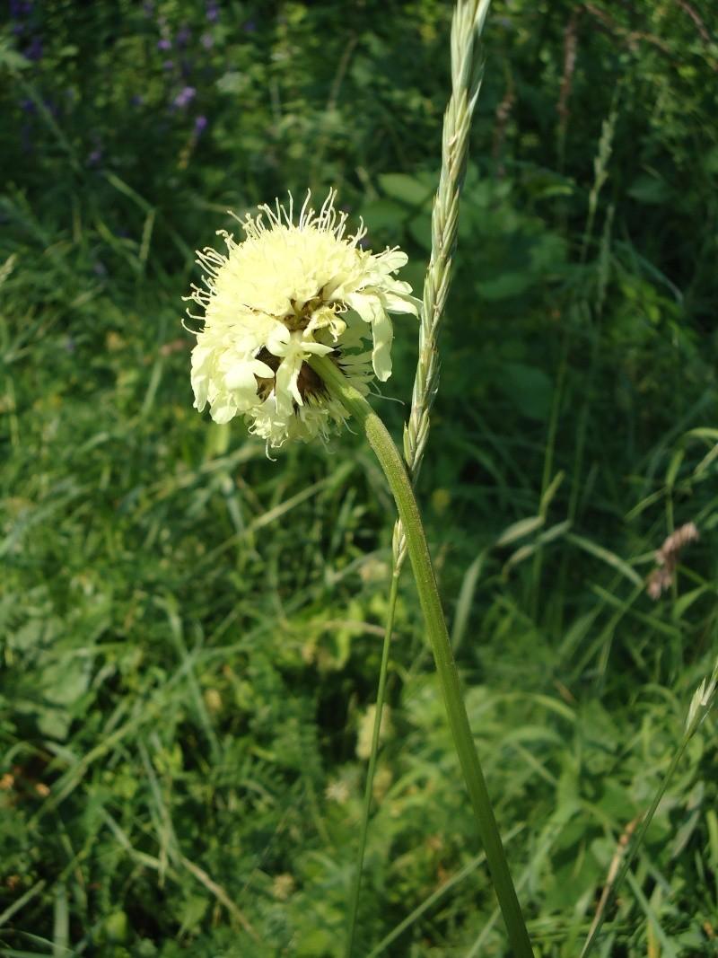 Самара: Ботанический Сад Dsc04834