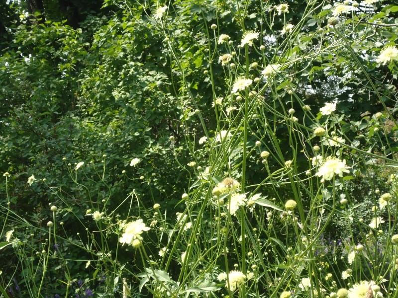 Самара: Ботанический Сад Dsc04835