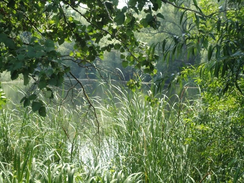 Самара: Ботанический Сад Dsc04837