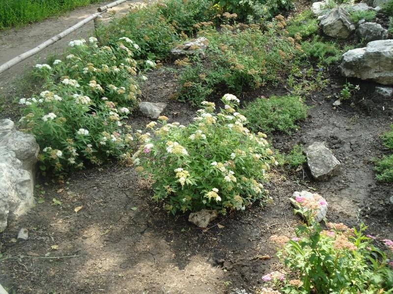 Самара: Ботанический Сад Dsc04840