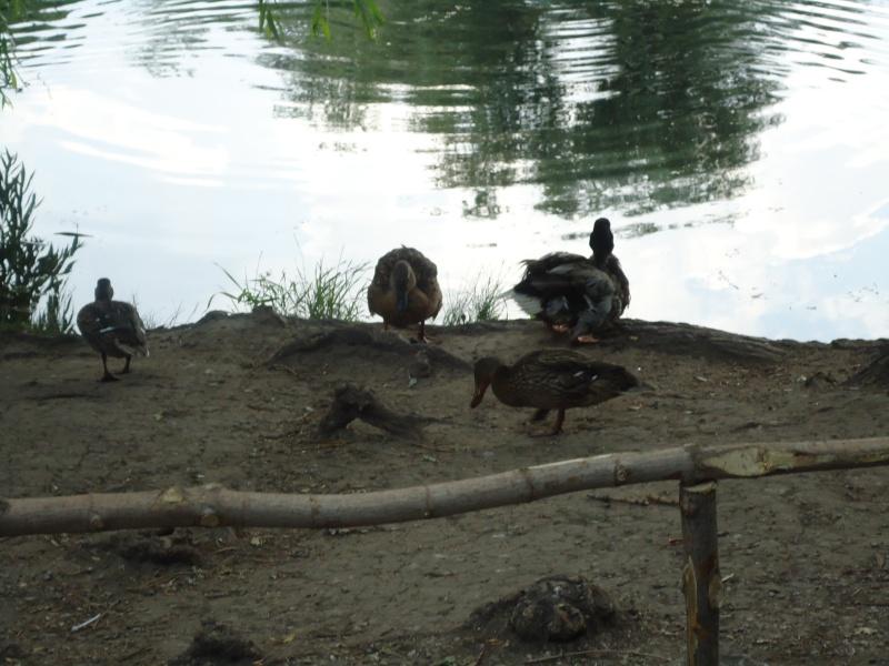 Самара: Ботанический Сад Dsc04847