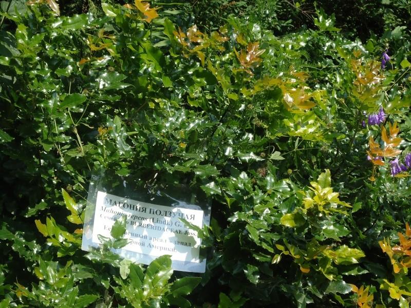 Самара: Ботанический Сад - Страница 2 Dsc04850