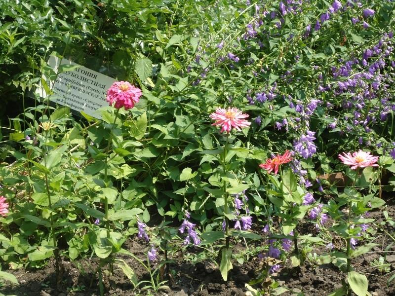 Самара: Ботанический Сад - Страница 2 Dsc04851
