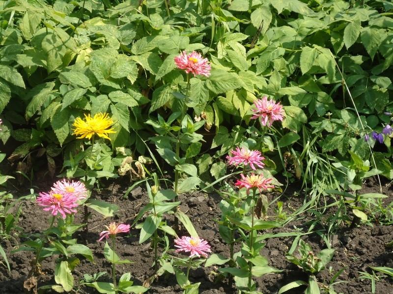 Самара: Ботанический Сад - Страница 2 Dsc04852