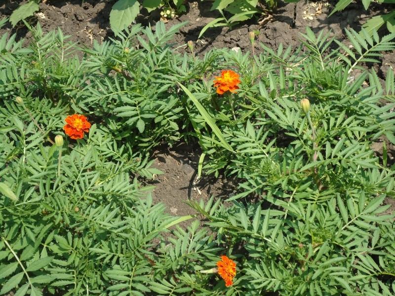 Самара: Ботанический Сад - Страница 2 Dsc04910