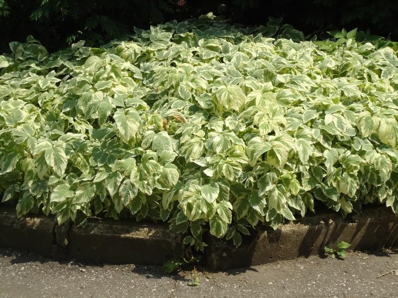 Самара: Ботанический Сад - Страница 2 Dsc04911