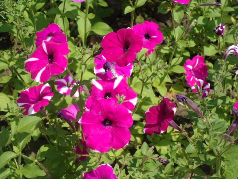 Самара: Ботанический Сад - Страница 2 Dsc04912