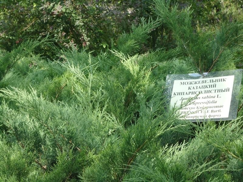 Самара: Ботанический Сад - Страница 2 Dsc04913