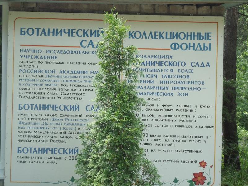 Самара: Ботанический Сад - Страница 2 Dsc04914