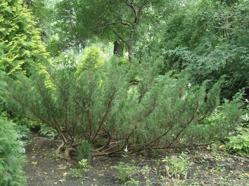 Самара: Ботанический Сад - Страница 2 Dsc04916