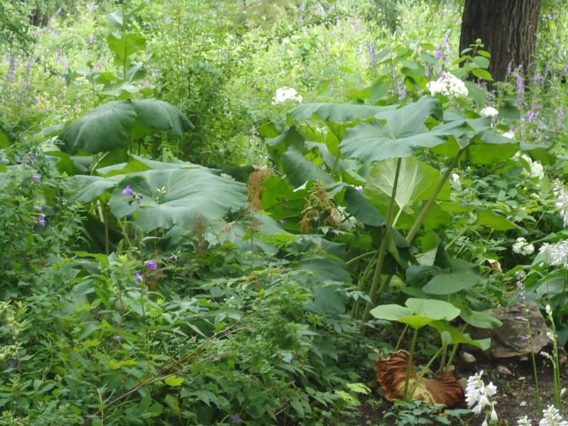 Самара: Ботанический Сад - Страница 2 Dsc04918